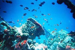 marine-life