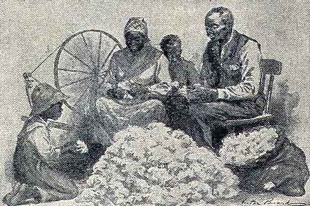 cotton-seed-separation-with-hands