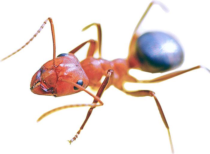 ant-crawling