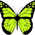 greenish Butterfly