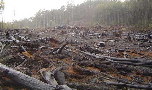 destroyed-forest