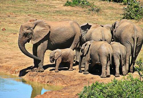 elephant-habitat