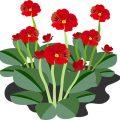 flowering-plant