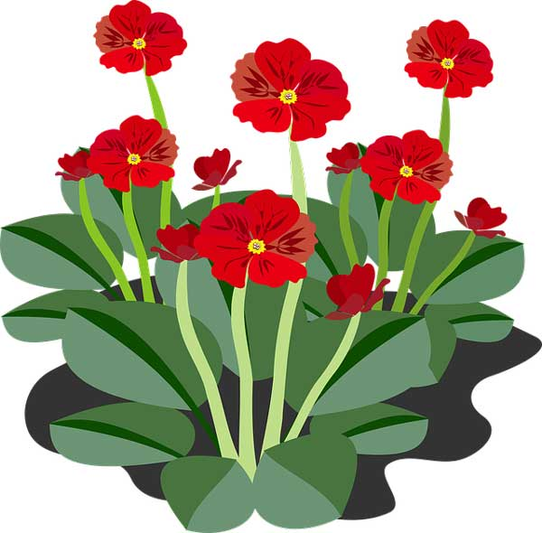 Flowering Plants Pollination Growth And Facts Science4fun