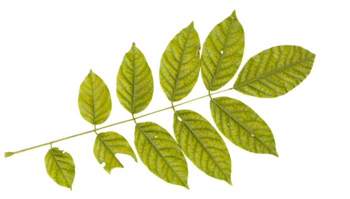 leaves-of-a-plant