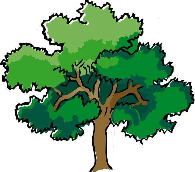 Trees Types Structure And Facts Science4fun