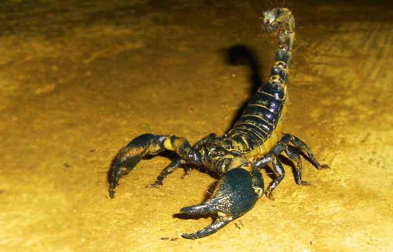 scorpion-on-the-ground