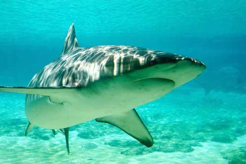 shark-habitat