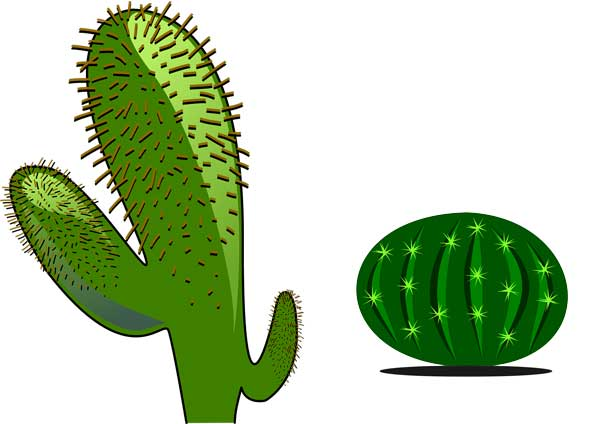 Cactus Plant: (Habitation, Growth, and Facts) - Science4Fun