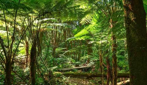 rainforest-inside