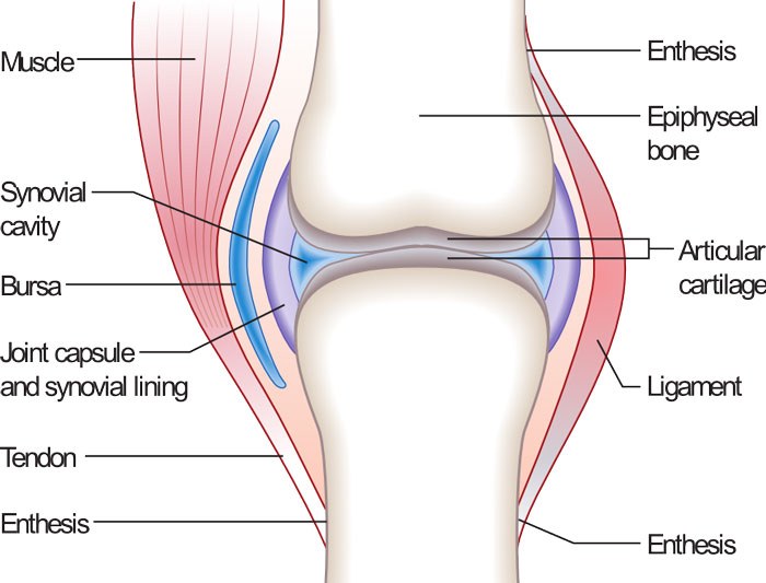 bone-joint