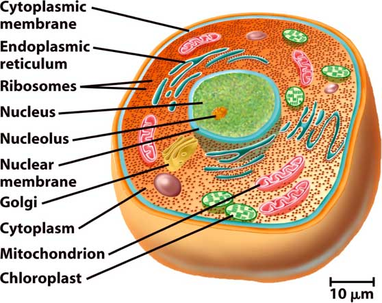 eukaryotic-cell