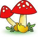 mushrooms-fungi