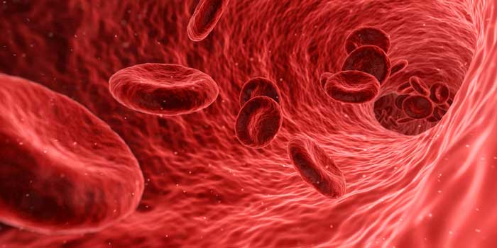 red-blood-cells-in-blood-vessels