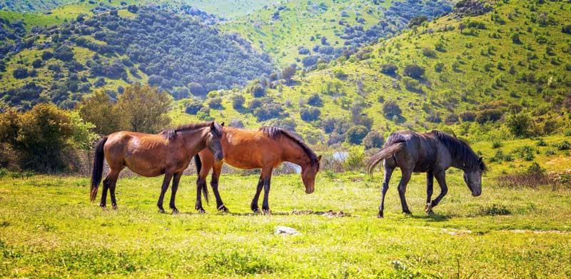 horses-in-valley