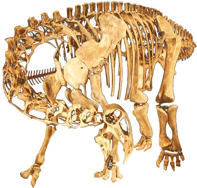 Nigersaurus-skeleton