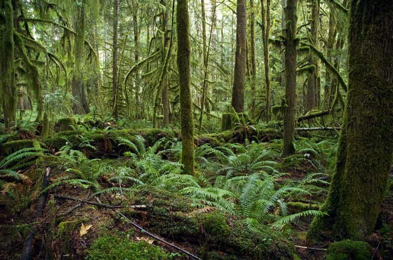 temperate-rain-forest