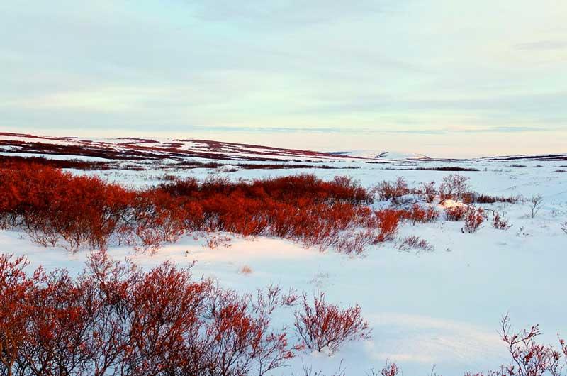 tundra-biome